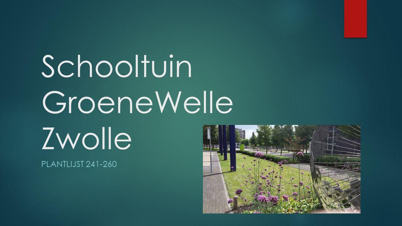 Schooltuin GroeneWelle Zwolle
