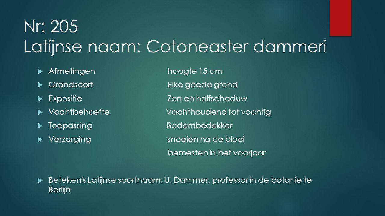 Nr: 205 Latijnse naam: Cotoneaster dammeri