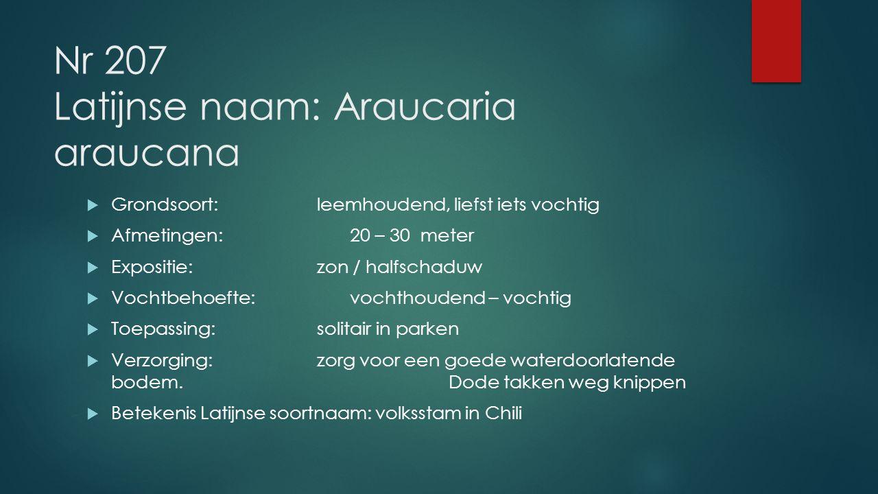 Nr 207 Latijnse naam: Araucaria araucana