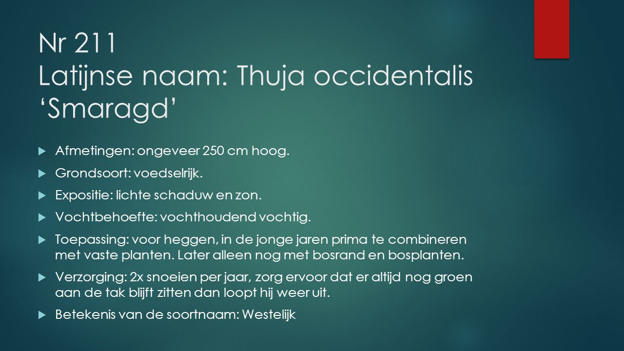 Nr 211 Latijnse naam: Thuja occidentalis 'Smaragd'