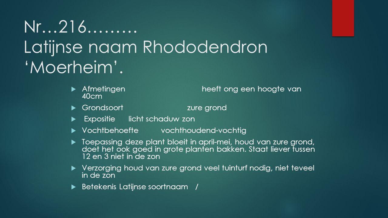 Nr…216……… Latijnse naam Rhododendron 'Moerheim'.
