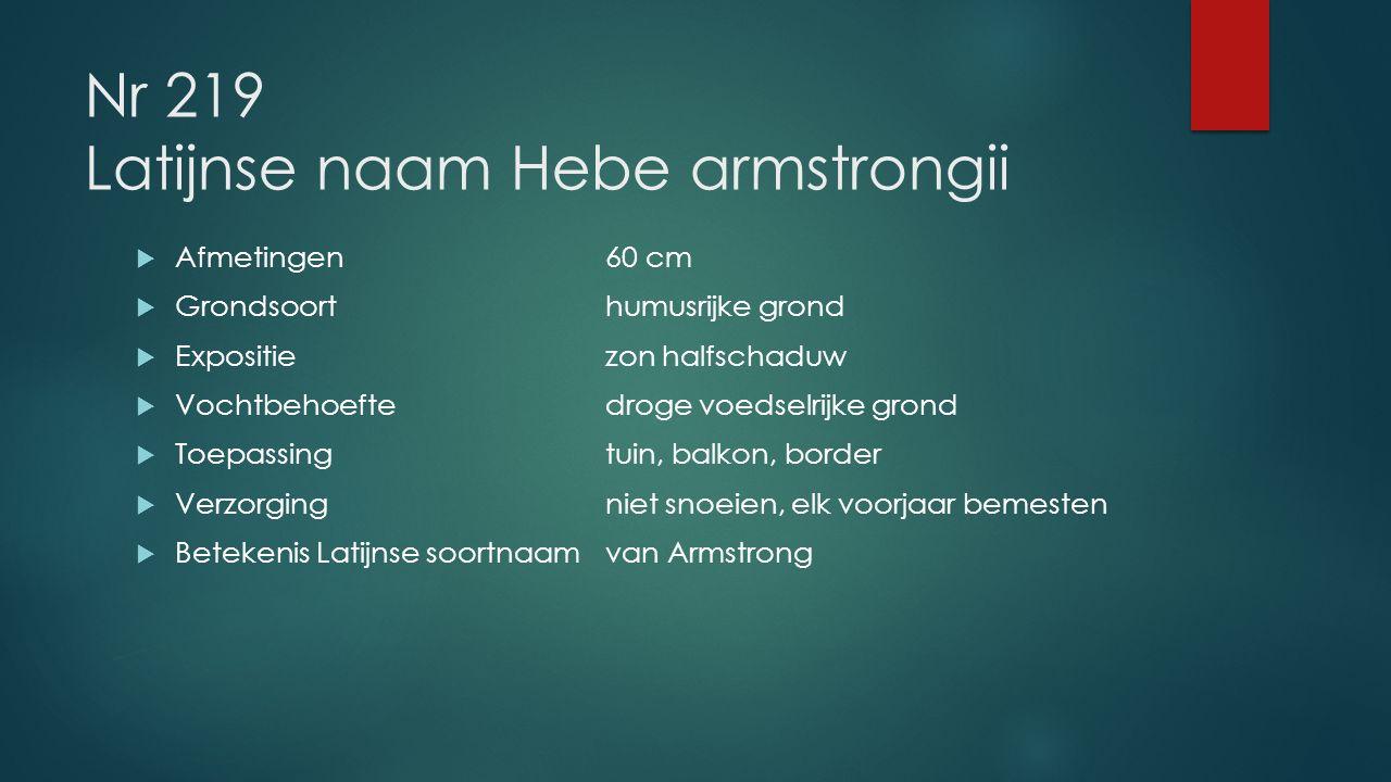 Nr 219 Latijnse naam Hebe armstrongii