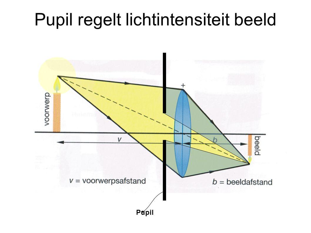 Pupil regelt lichtintensiteit beeld