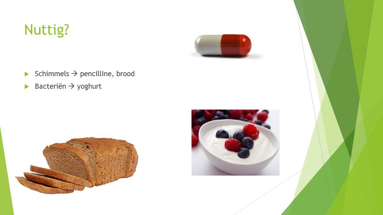 Nuttig Schimmels  pencilline, brood Bacteriën  yoghurt