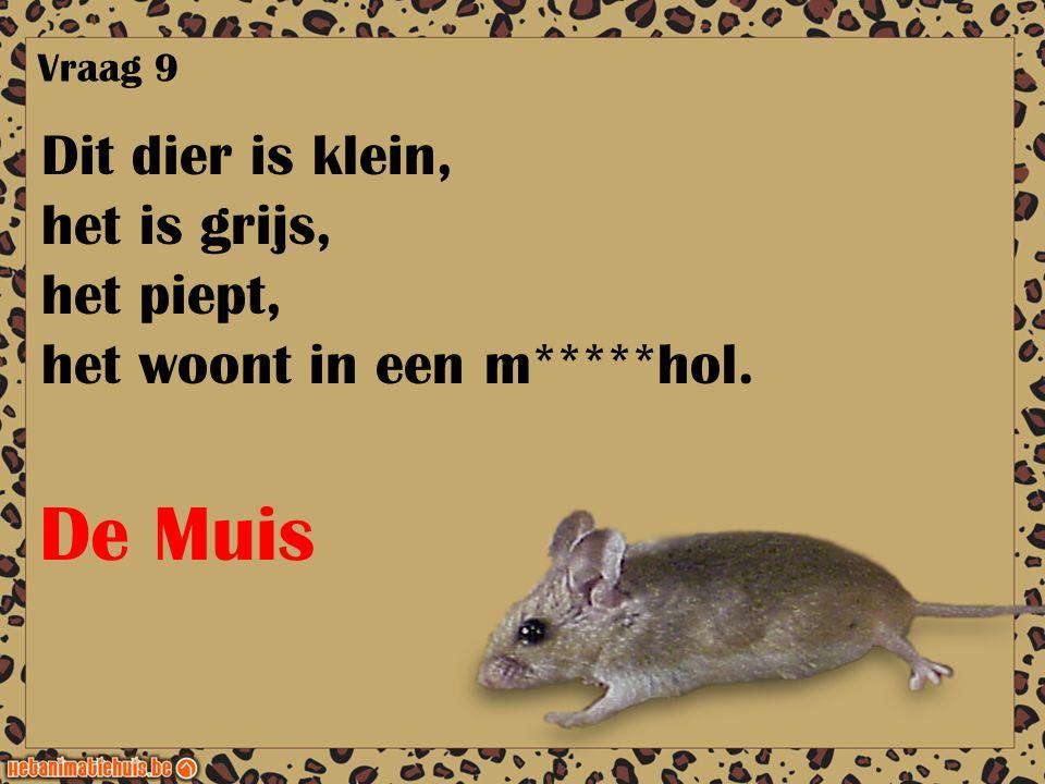 De Muis Dit dier is klein, het is grijs, het piept,