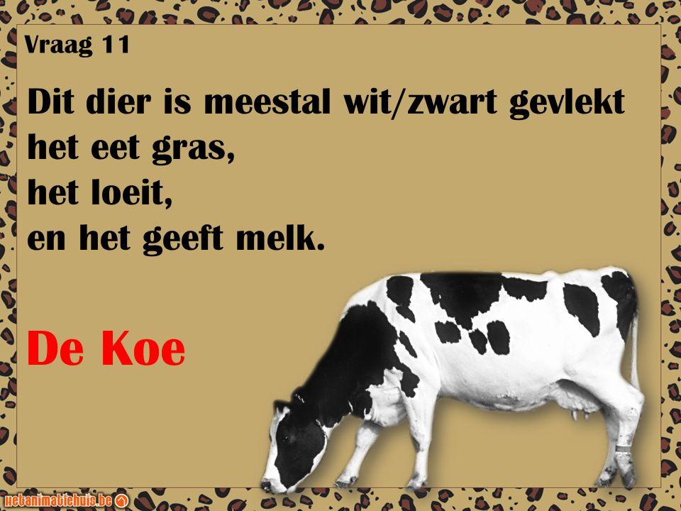 De Koe Dit dier is meestal wit/zwart gevlekt het eet gras, het loeit,