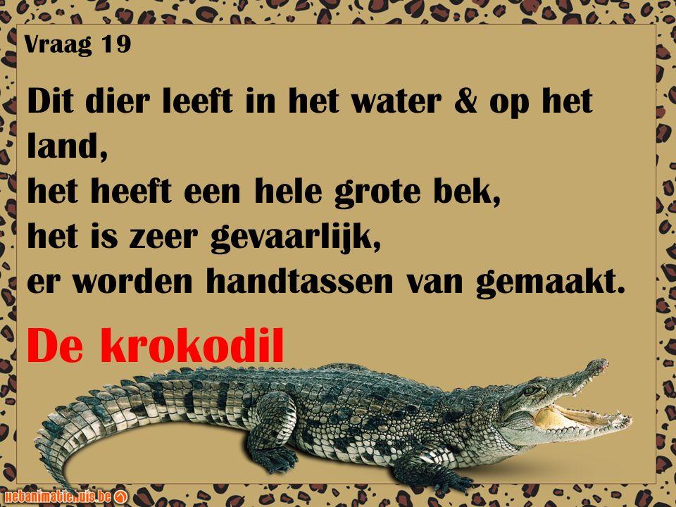 De krokodil Dit dier leeft in het water & op het land,
