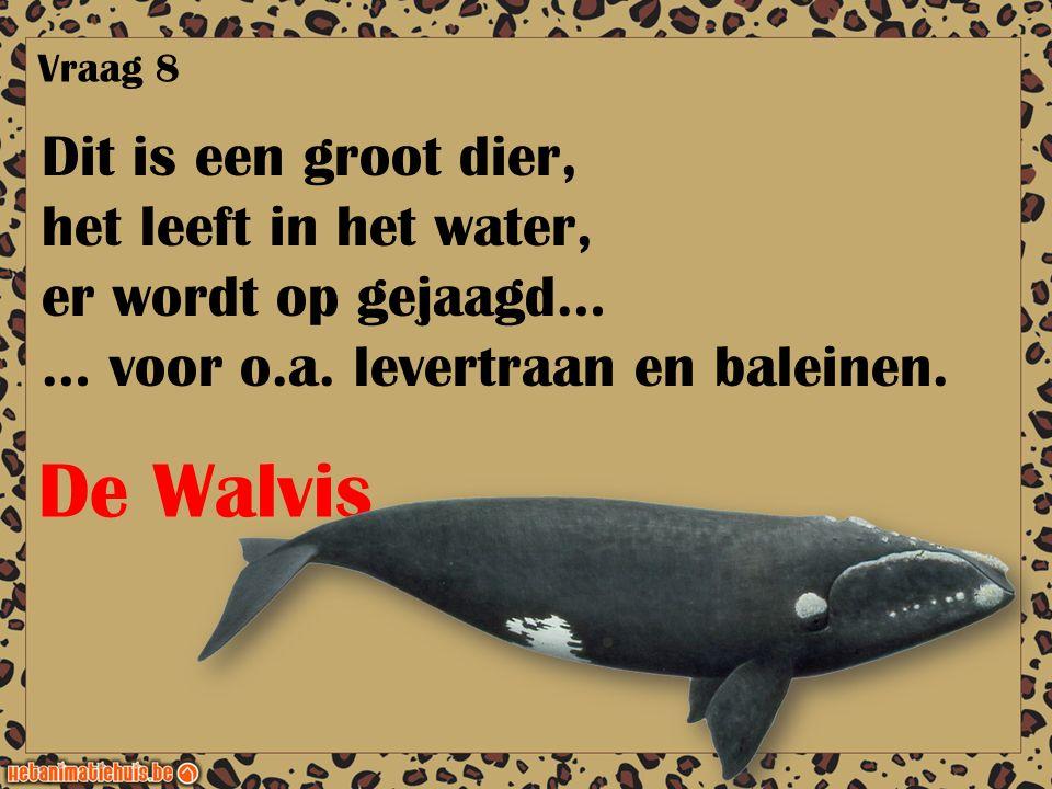 De Walvis Dit is een groot dier, het leeft in het water,