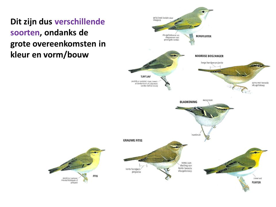 Dit zijn dus verschillende soorten, ondanks de grote overeenkomsten in kleur en vorm/bouw