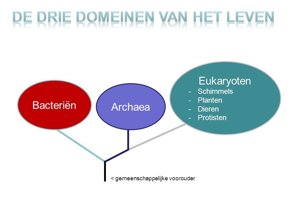 De drie domeinen van het leven