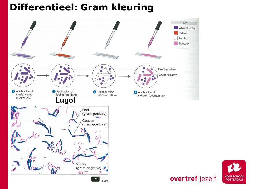 Differentieel: Gram kleuring