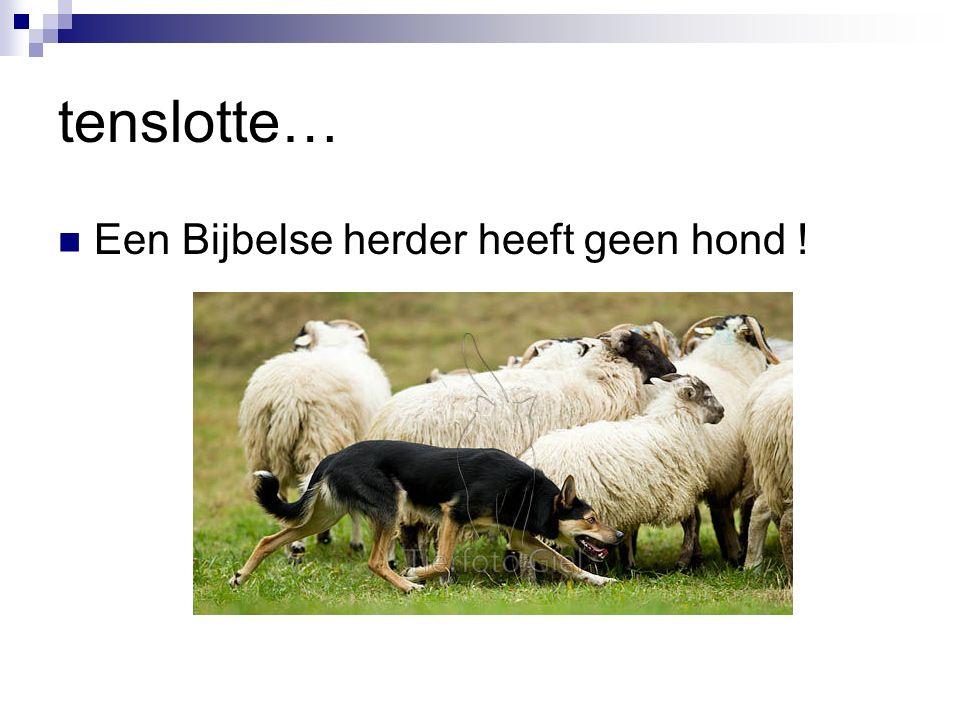 tenslotte… Een Bijbelse herder heeft geen hond !