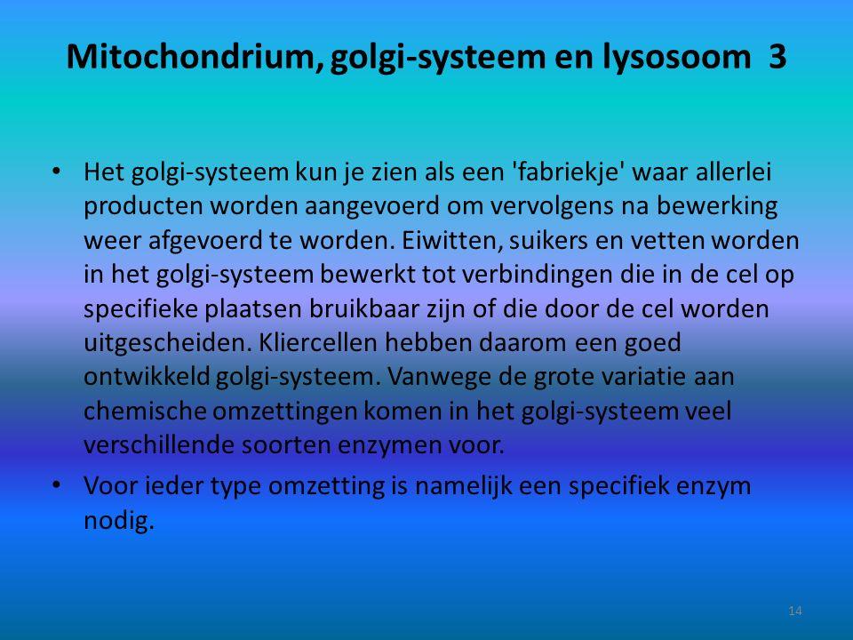 Mitochondrium, golgi-systeem en lysosoom 3