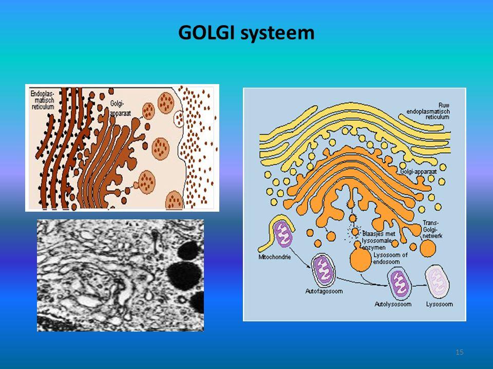 GOLGI systeem