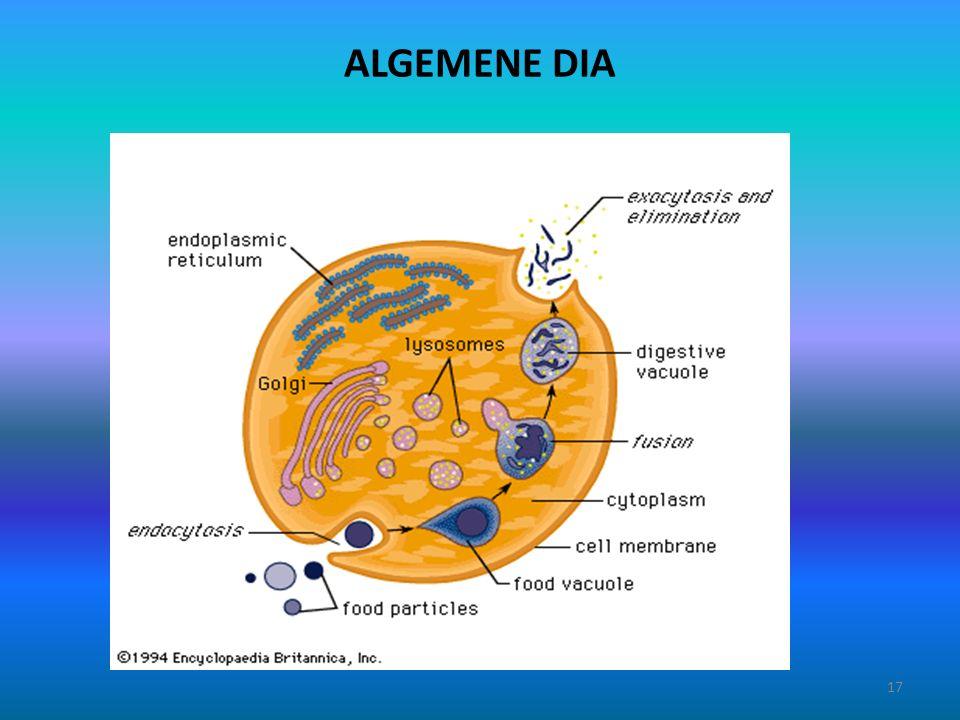 ALGEMENE DIA