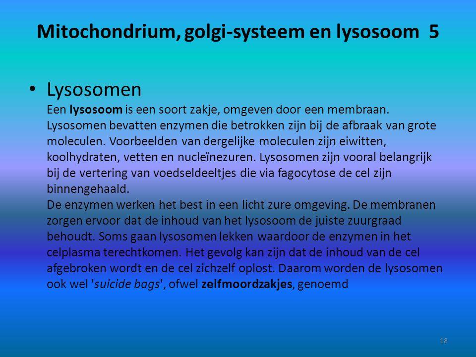 Mitochondrium, golgi-systeem en lysosoom 5