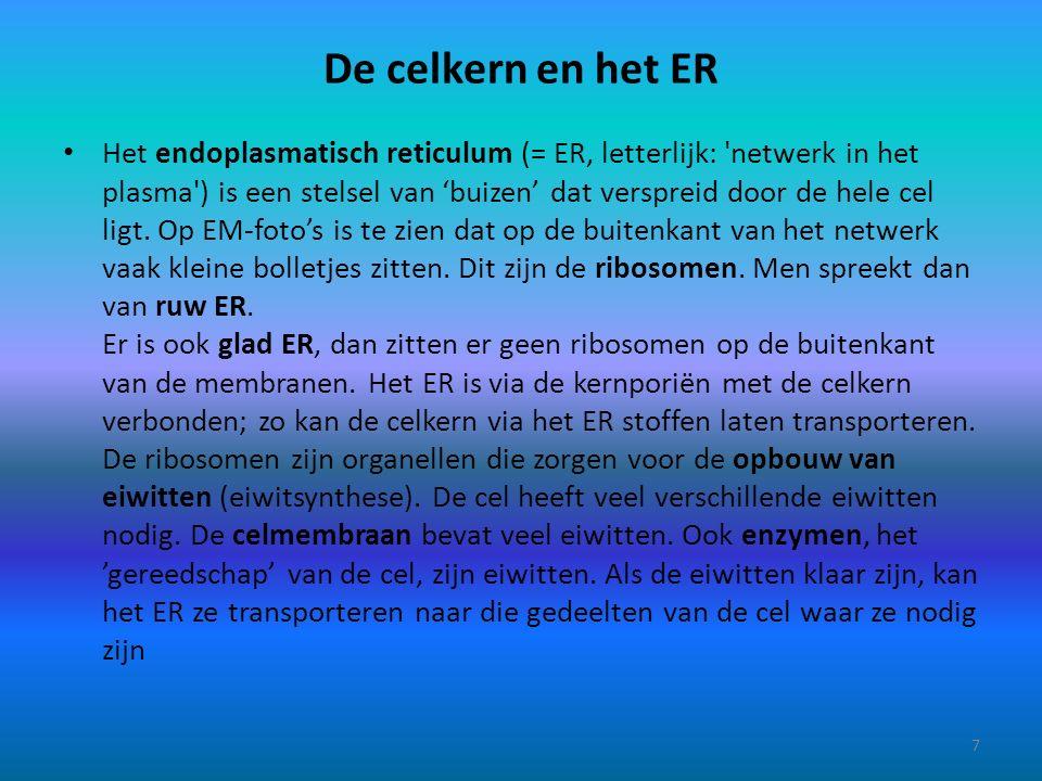 De celkern en het ER