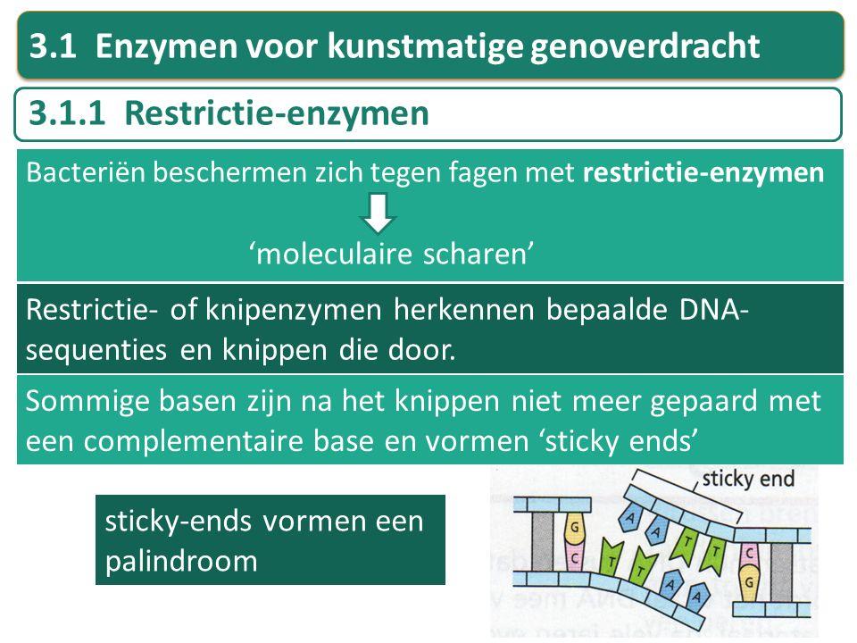 3.1 Enzymen voor kunstmatige genoverdracht
