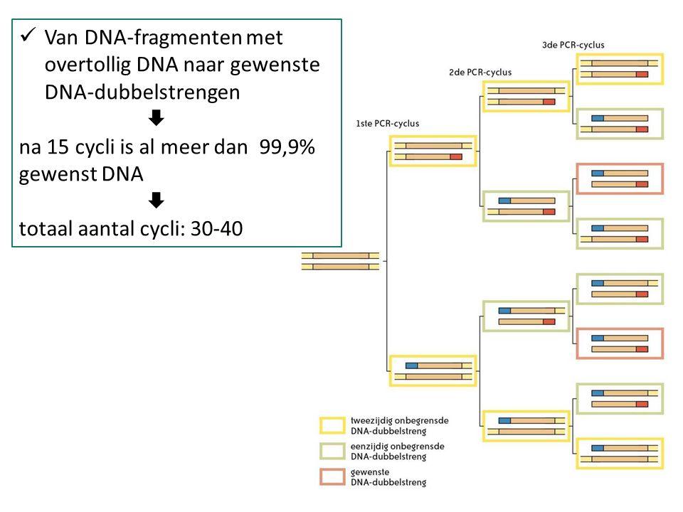 Van DNA-fragmenten met overtollig DNA naar gewenste DNA-dubbelstrengen