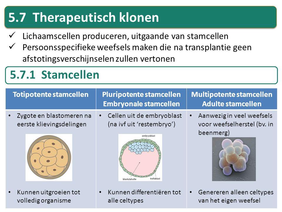 5.7 Therapeutisch klonen 5.7.1 Stamcellen