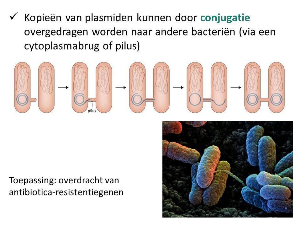 Kopieën van plasmiden kunnen door conjugatie overgedragen worden naar andere bacteriën (via een cytoplasmabrug of pilus)