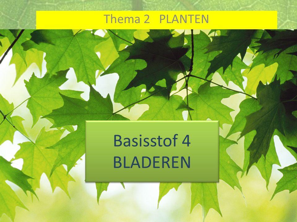 Thema 2 PLANTEN Basisstof 4 BLADEREN