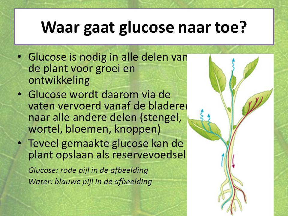 Waar gaat glucose naar toe
