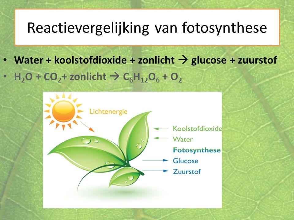 Reactievergelijking van fotosynthese