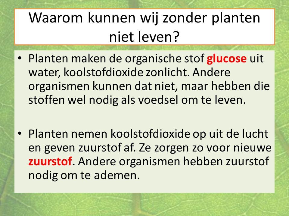Waarom kunnen wij zonder planten niet leven
