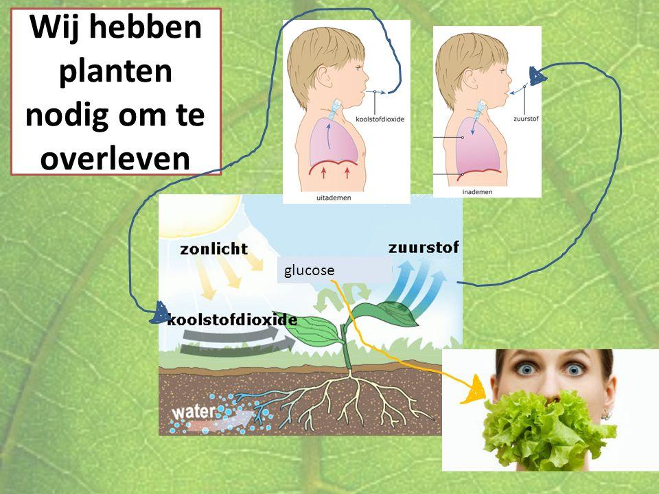 Wij hebben planten nodig om te overleven