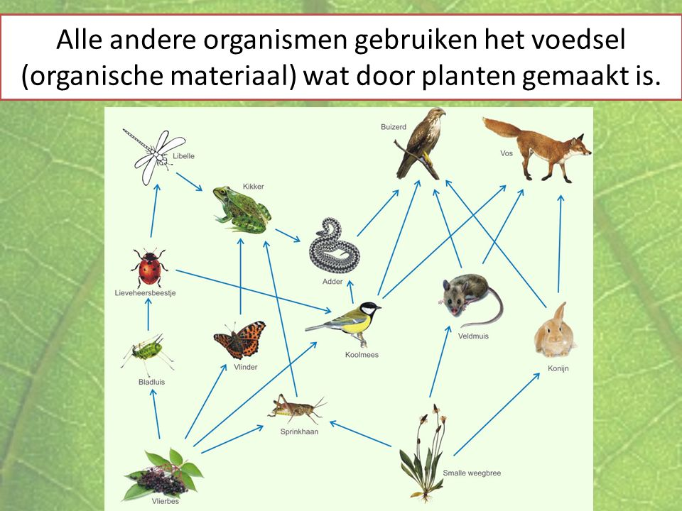 Alle andere organismen gebruiken het voedsel (organische materiaal) wat door planten gemaakt is.