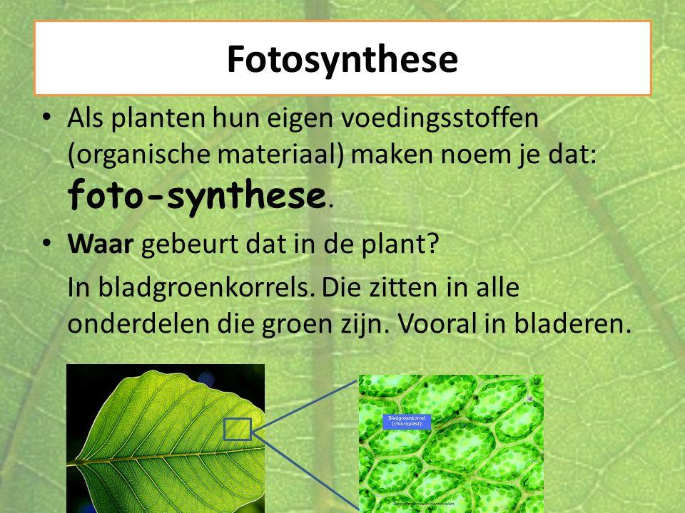 Fotosynthese Als planten hun eigen voedingsstoffen (organische materiaal) maken noem je dat: foto-synthese.