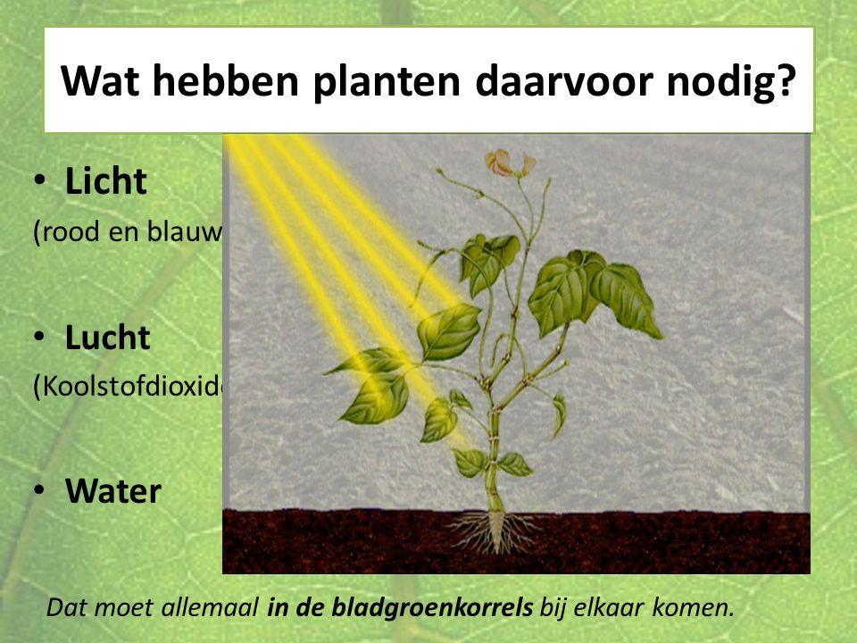 Wat hebben planten daarvoor nodig