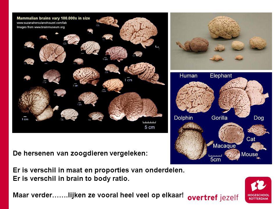De hersenen van zoogdieren vergeleken: