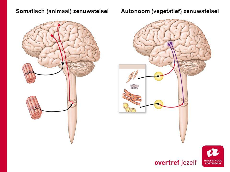 Somatisch (animaal) zenuwstelsel