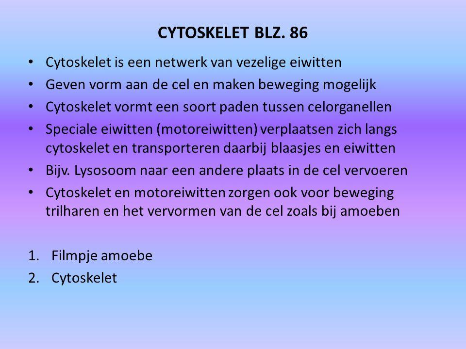 CYTOSKELET BLZ. 86 Cytoskelet is een netwerk van vezelige eiwitten