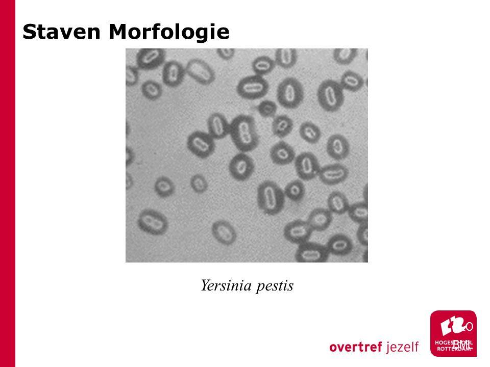 Staven Morfologie Yersinia pestis HLO BML