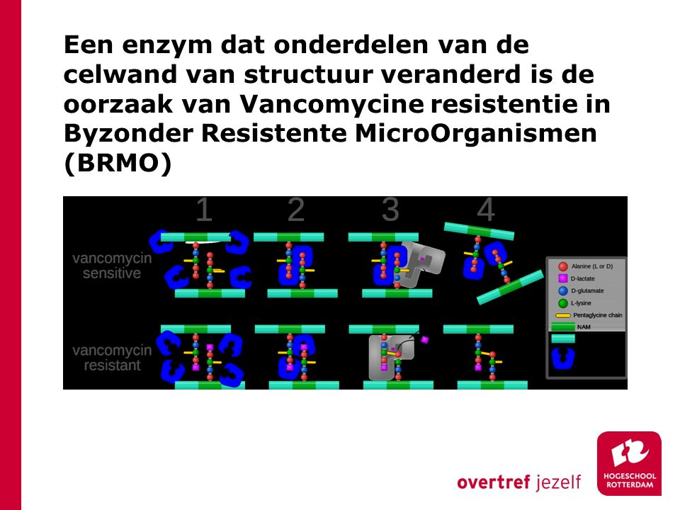 Een enzym dat onderdelen van de celwand van structuur veranderd is de oorzaak van Vancomycine resistentie in Byzonder Resistente MicroOrganismen (BRMO)