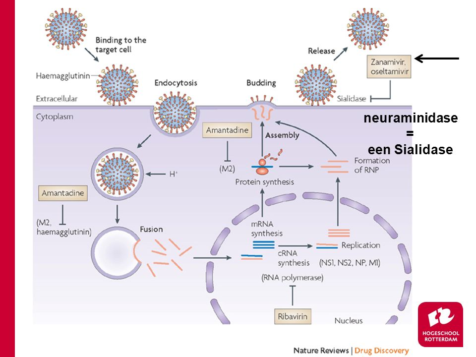 infectie Influenza virus