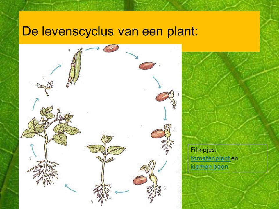 De levenscyclus van een plant: