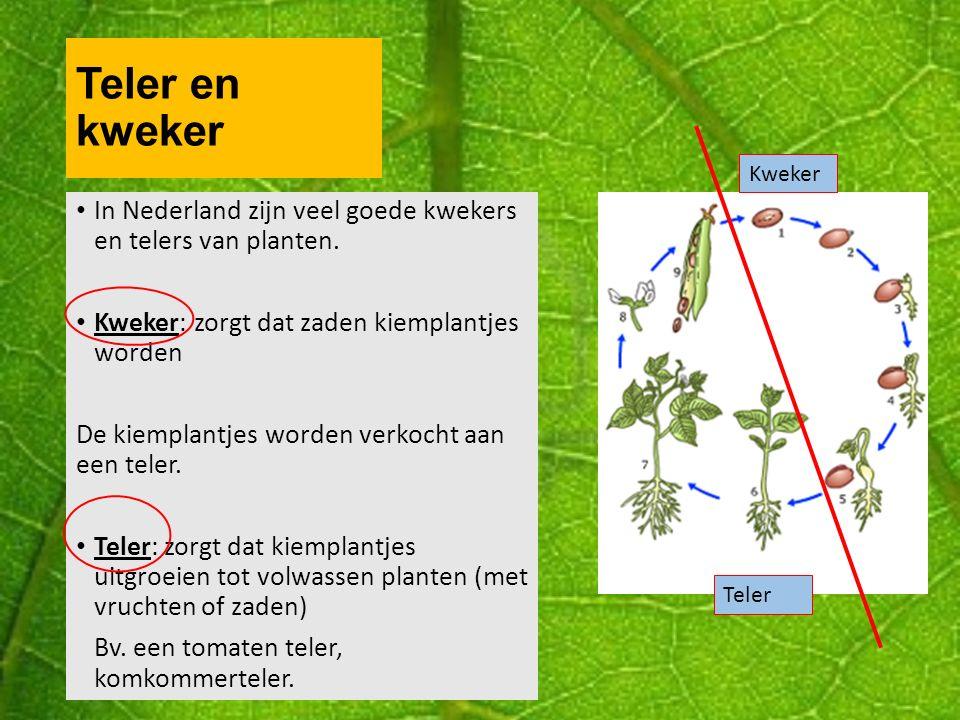 Teler en kweker Kweker. In Nederland zijn veel goede kwekers en telers van planten. Kweker: zorgt dat zaden kiemplantjes worden.