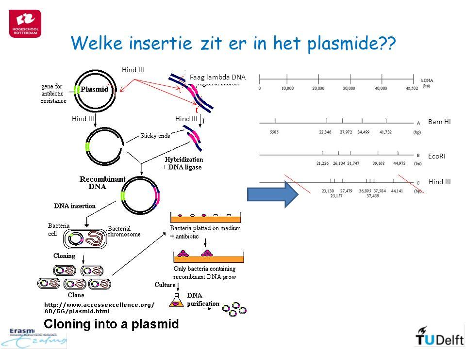 Welke insertie zit er in het plasmide