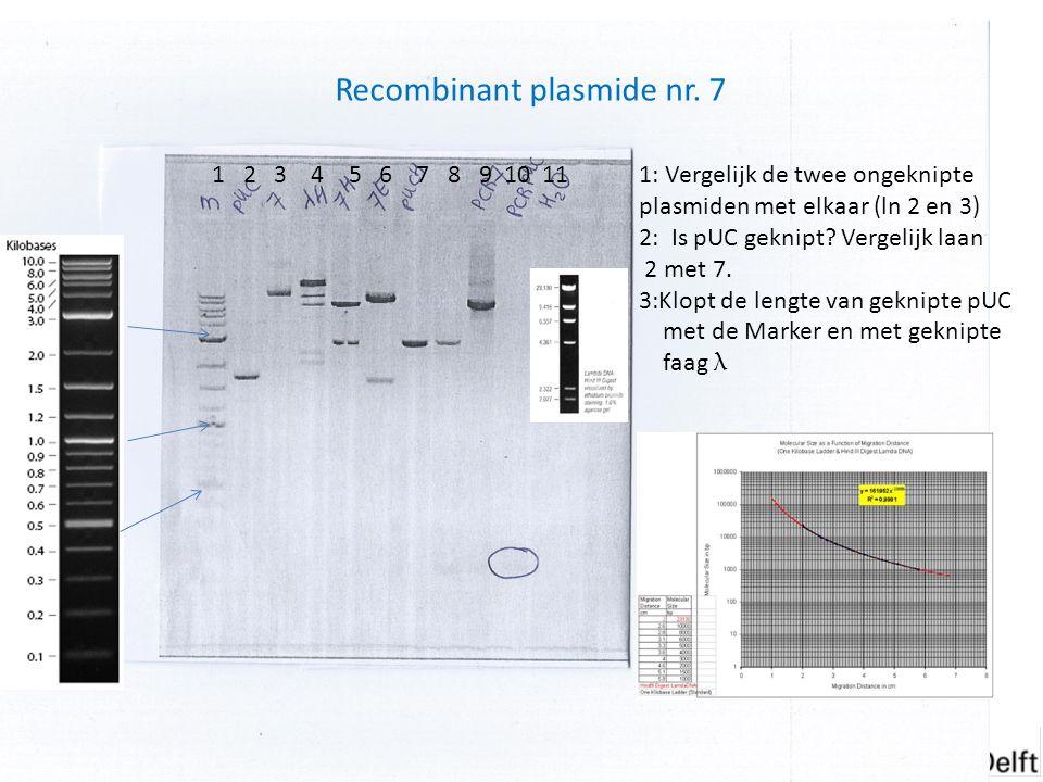 Experimenten van week 6 Recombinant plasmide nr. 7