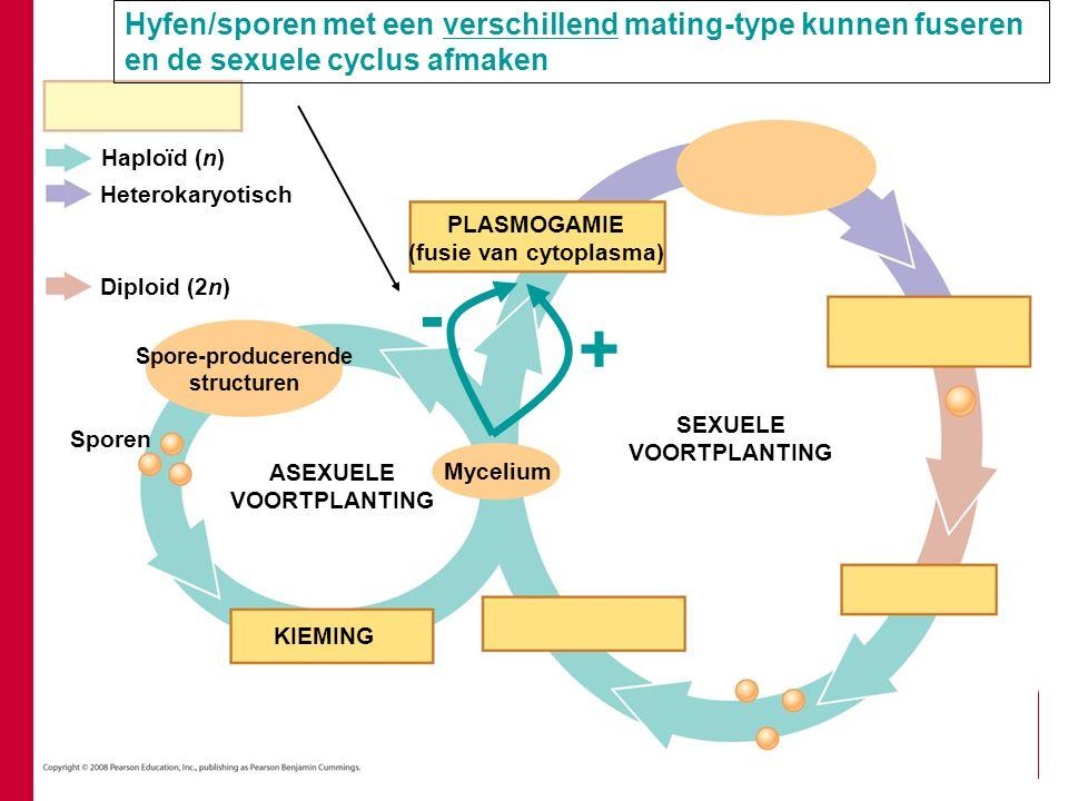 (fusie van cytoplasma)