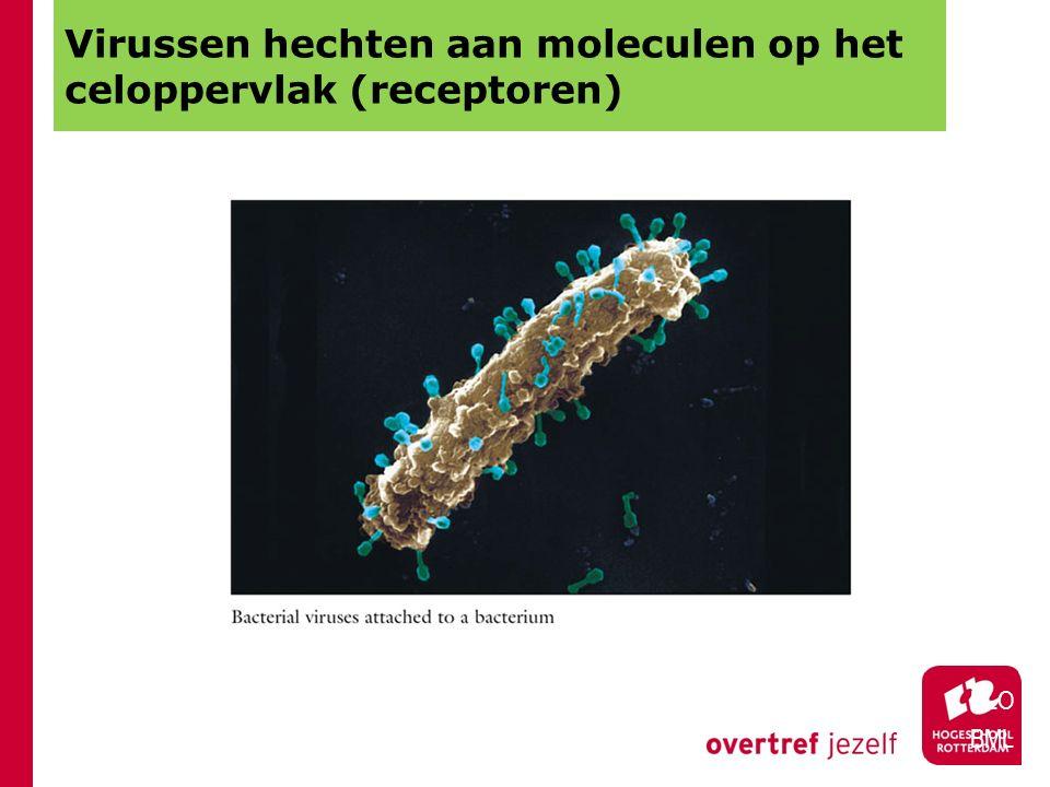 Virussen hechten aan moleculen op het celoppervlak (receptoren)
