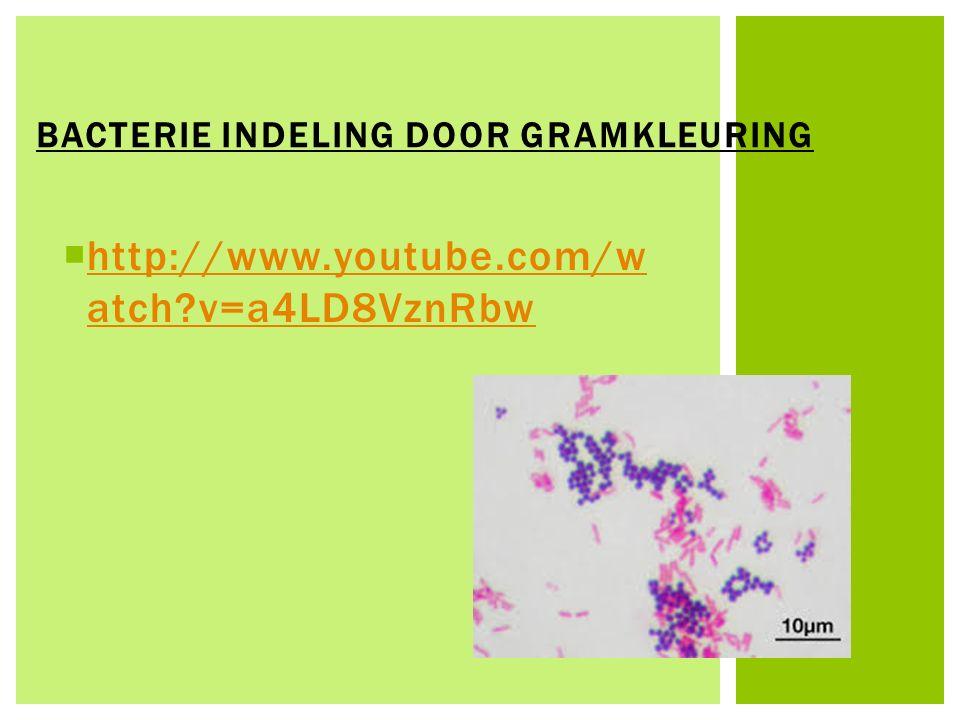 Bacterie Indeling door Gramkleuring