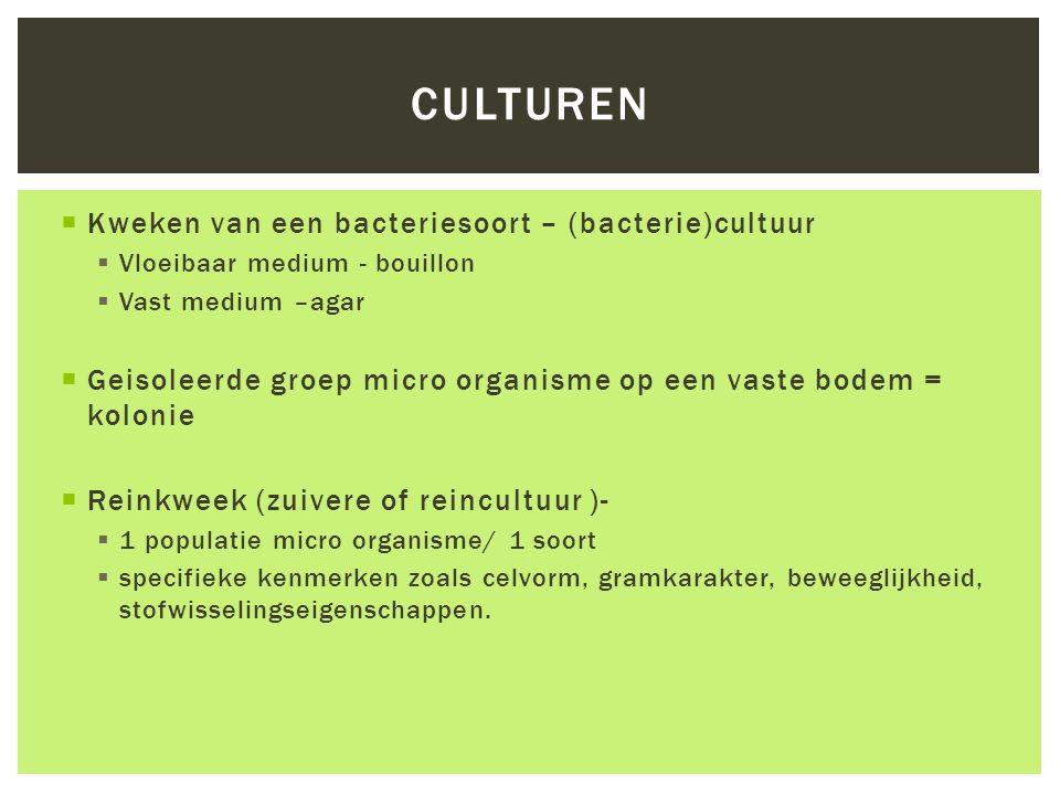 Culturen Kweken van een bacteriesoort – (bacterie)cultuur