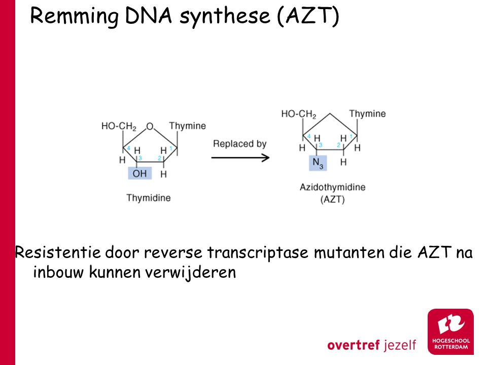 Remming DNA synthese (AZT)
