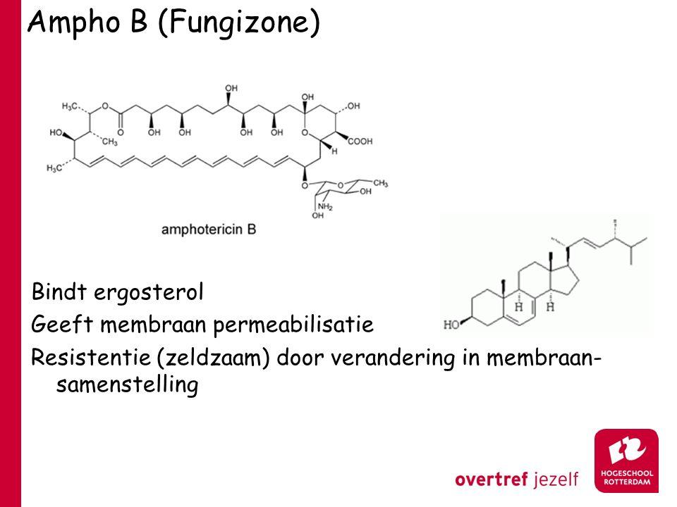 Ampho B (Fungizone) Bindt ergosterol Geeft membraan permeabilisatie