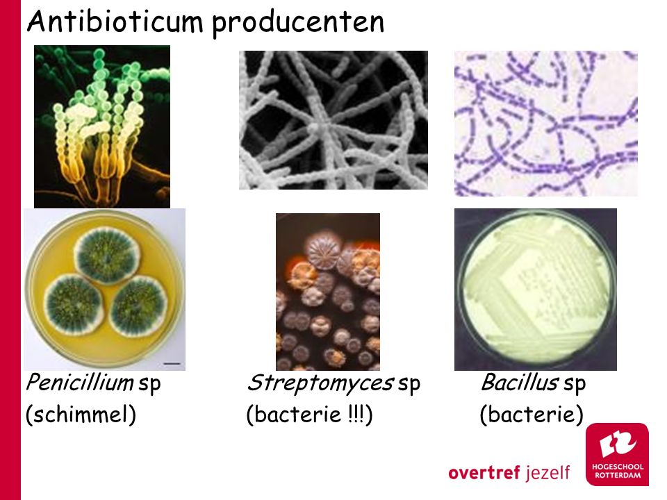 Antibioticum producenten